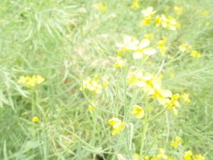 Motherfarm_032